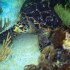 Sealife Photos, Second Gallery : These are pictures taken with my Sealife camera, my second effort. I've included at the end some pictures taken above water, to show that the camera works, when one turns off the external, strobe flash, but there is good enough lighting! Enjoy!